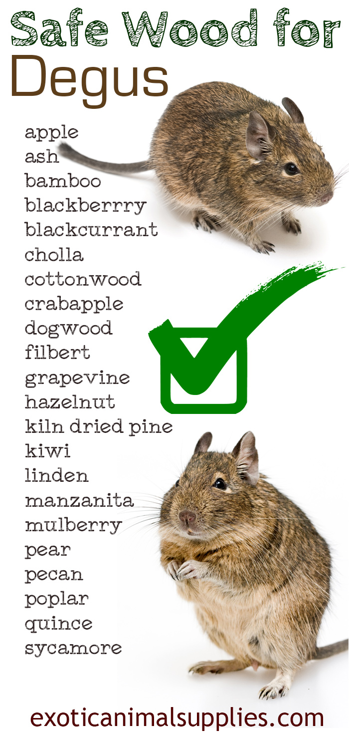 Complete List of Safe Wood for Degus