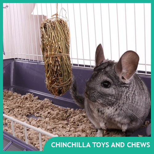 Chinchilla Toys, Wood Chews & Other Fun Stuff