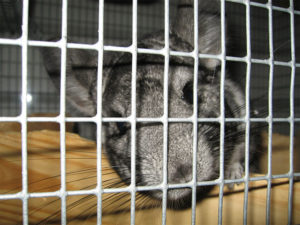 Chinchilla Cage Accessories