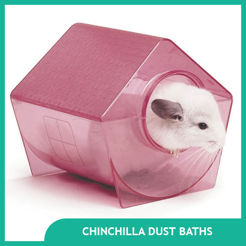 Chinchilla Dust Bath and Sand