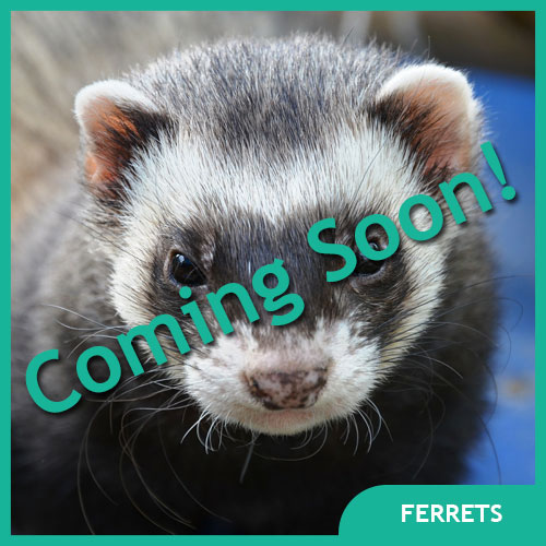 Ferret Pet Supplies