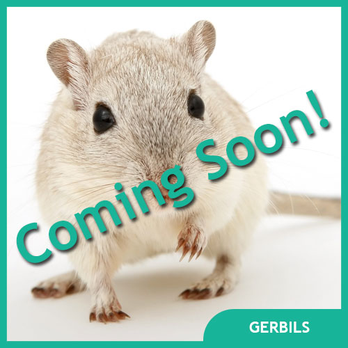 Gerbil Pet Supplies