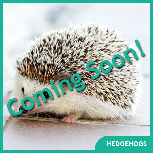 Hedgehog Pet Supplies