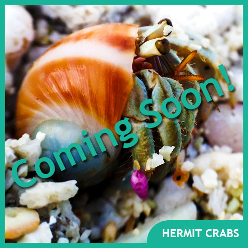 Hermit Crab Pet Supplies