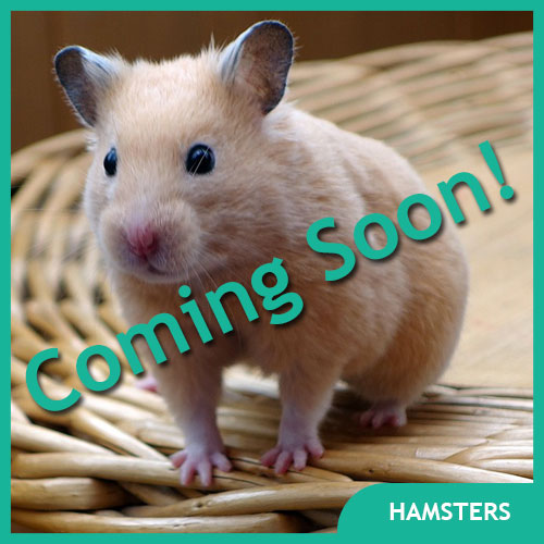 Hamster Pet Supplies