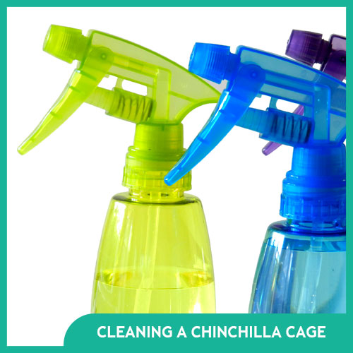 How to Clean a Chinchilla Cage