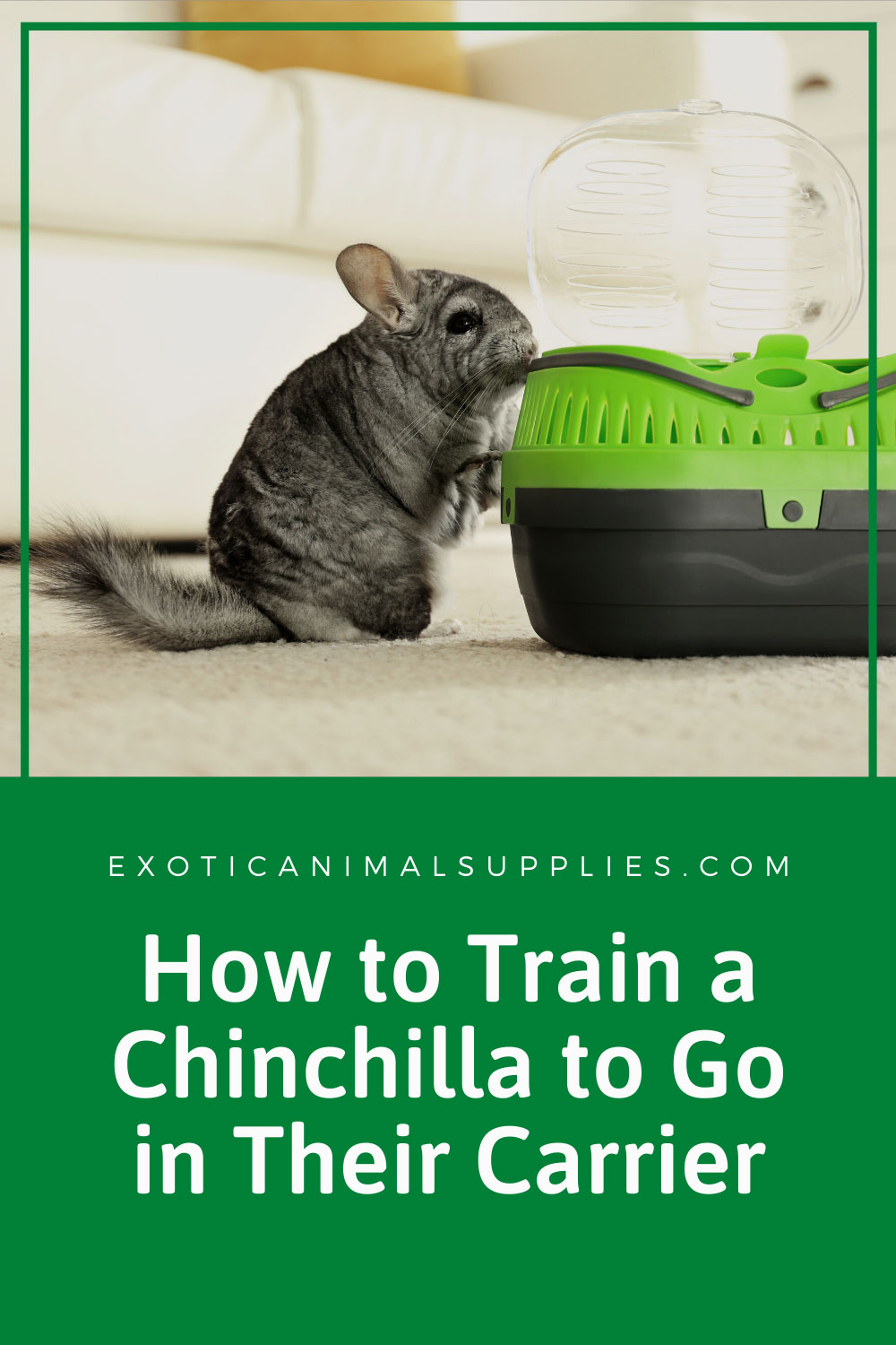 How to Train a Chinchilla to Go in a Carrier