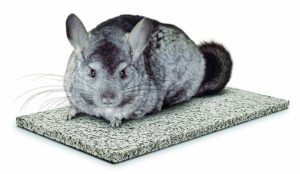 Keep your chinchilla cool with a chinchiller