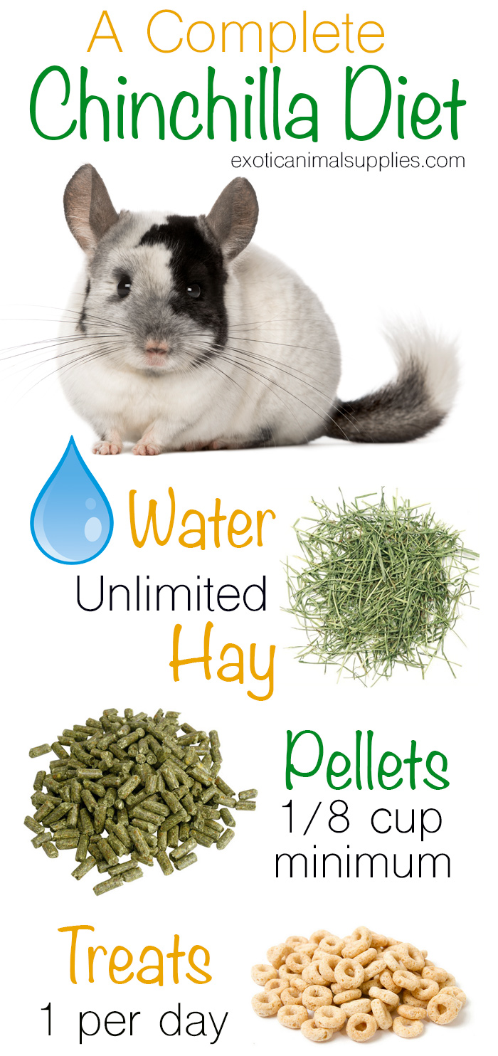 A Complete Adult Chinchilla Diet