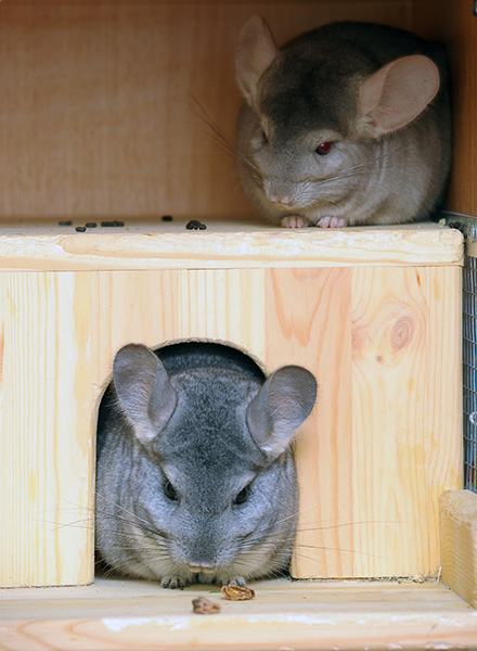 Chinchilla Houses, Nest Boxes, and Hideouts