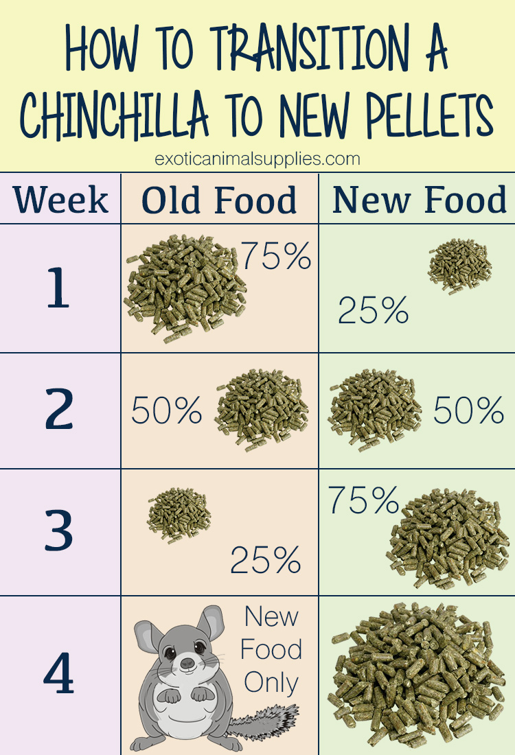 How to Transition a Chinchilla to a New Pellet Food