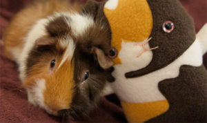 Custom Guinea Pig Plush Stuffed Animal