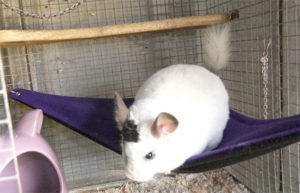 Medium image of fleece chinchilla corner hammock