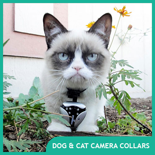 What are the best dog & cat camera collars & pet cameras?