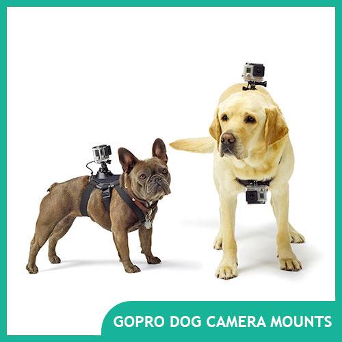 Best GoPro Dog Mount and GoPro Pet Mounts