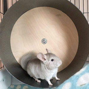 Chinchilla Wheel for Exercise