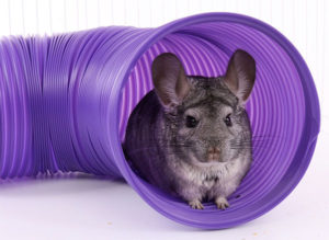 Chinchilla Toys Floor Tunnel