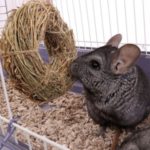 Chinchilla Hanging Toys & Chew Toys