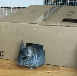 DIY Cardboard Box Maze