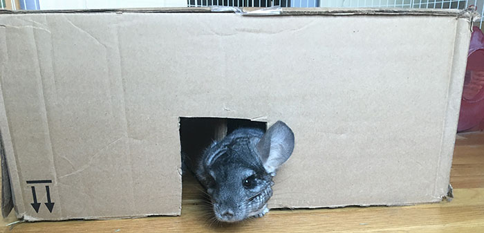 Homemade DIY Cardboard Maze for Small Pets