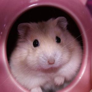 Safe Wood for Hamsters