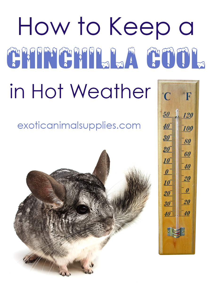 How to Keep a Chinchilla Cool in Hot Weather