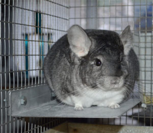 Stainless Steel Chinchilla Cage Shelves