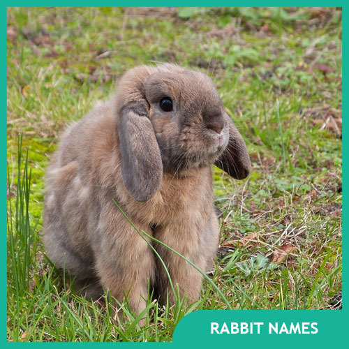 Bunny Names & Ideas for Pet Rabbit Names