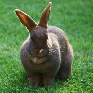 Female Bunny Names