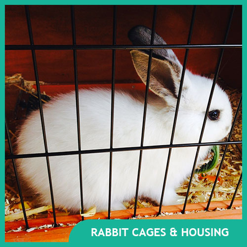 Rabbit Cages & Indoor Housing for Bunnies