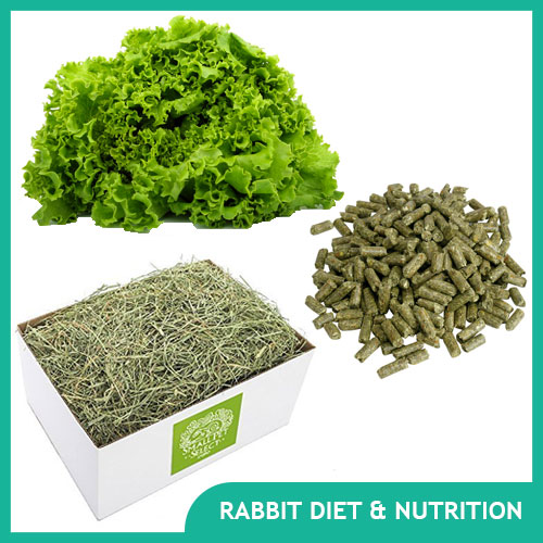 Pet Rabbit Diet: Bunny Food & Nutrition
