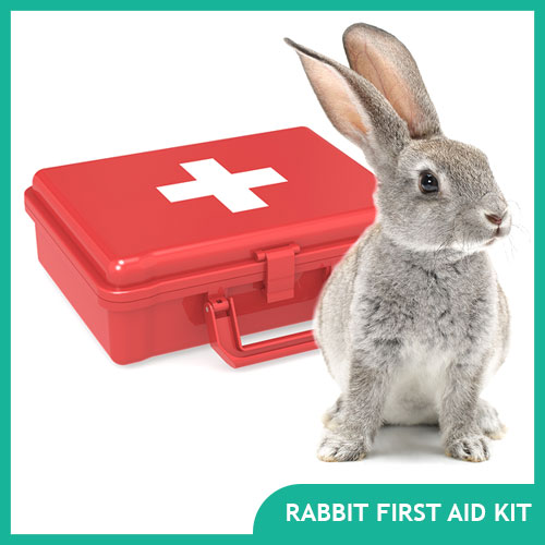 Rabbit First Aid Kit for Bunny Emergencies