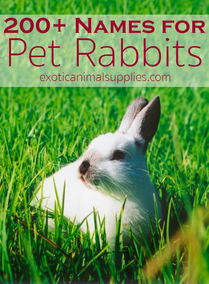 200+ Bunny Names & Ideas for Pet Rabbit Names