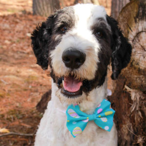 Easter Dog Bow Tie