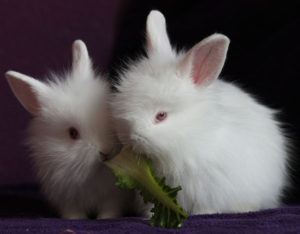 Introducing New Fruits & Vegetables to Your Bunny