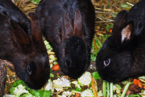 Vegetables for Rabbits & Bunnies