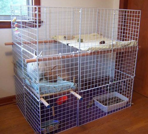 DIY Rabbit Cages & Bunny Condos