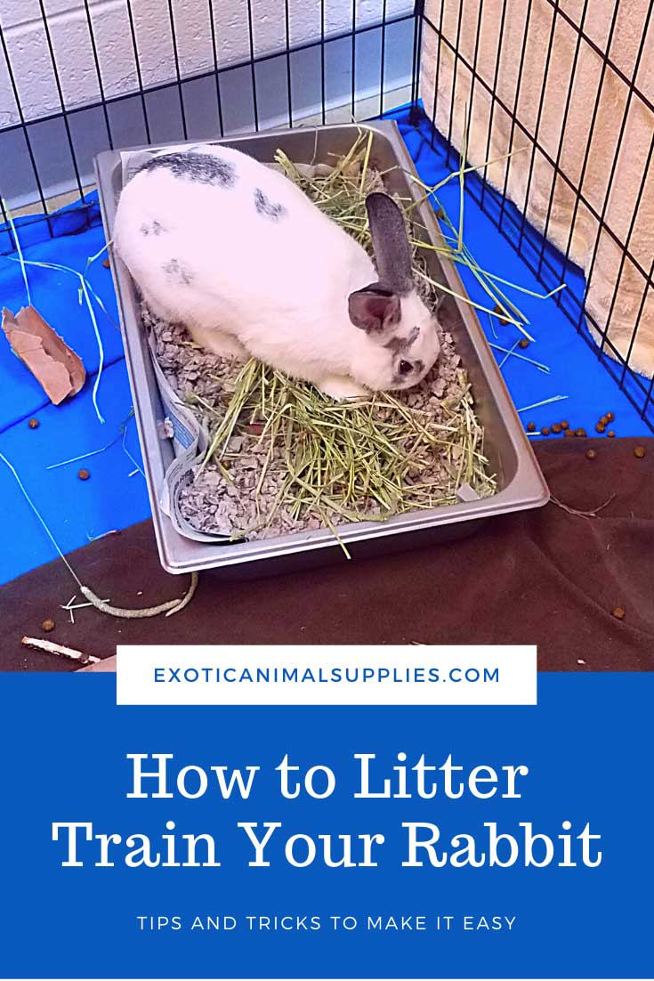 How to Litter Train a Rabbit - Best Bunny Litters & Litter Boxes