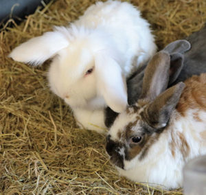 Rabbit Bedding and Bunny Litter