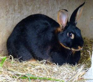 Best Rabbit Litter