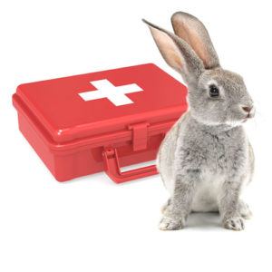 Rabbit First Aid Kit - Essentials for Bunny Emergencies