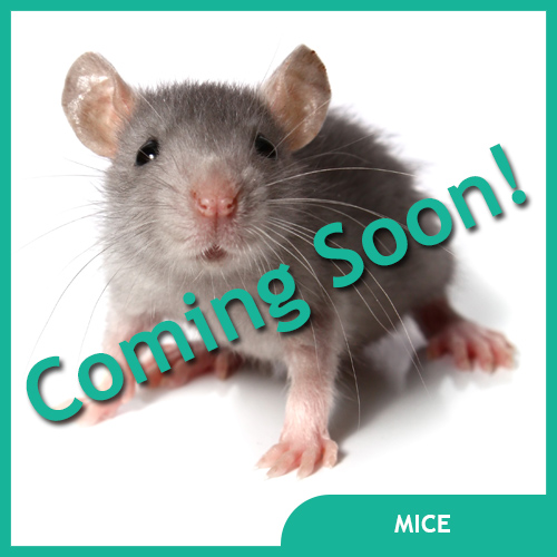 Mouse Pet Supplies