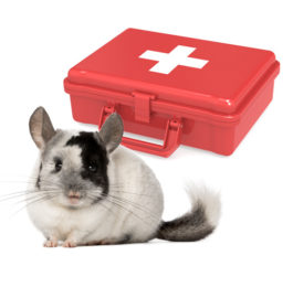 Chinchilla First Aid Kit for Emergencies