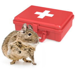 Degu First Aid Kit for Emergency Care