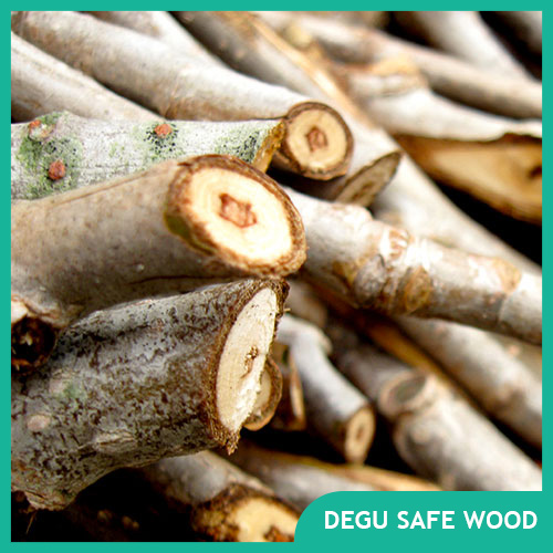 Safe Wood for Degus