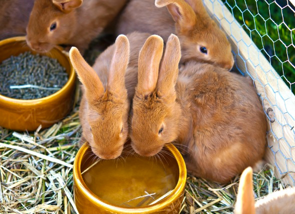 Rabbit Food Bowls, Hay Racks, & Water Bottles