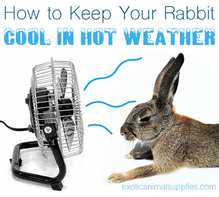 How to Keep Your Rabbit Cool in Hot Summer Weather