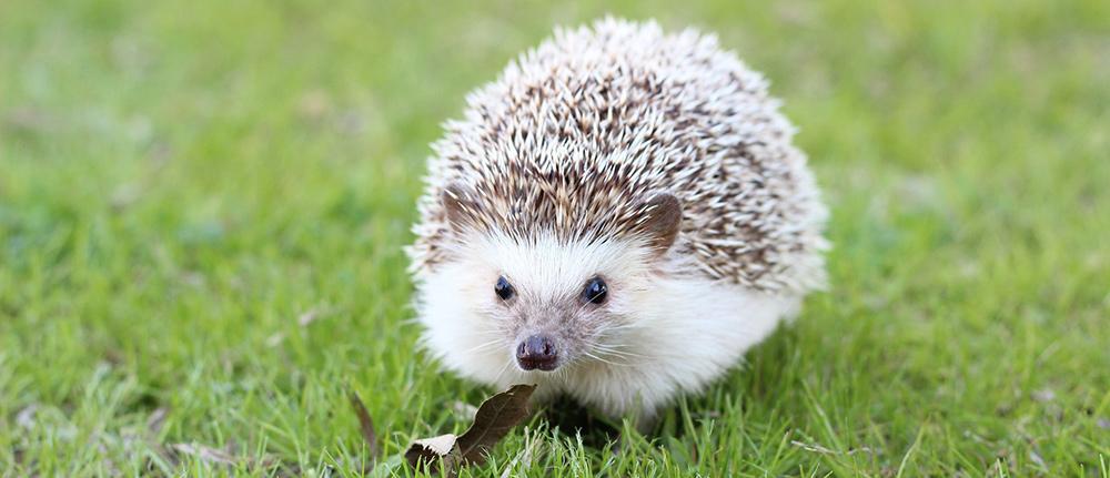 Cute Hedgehog Names