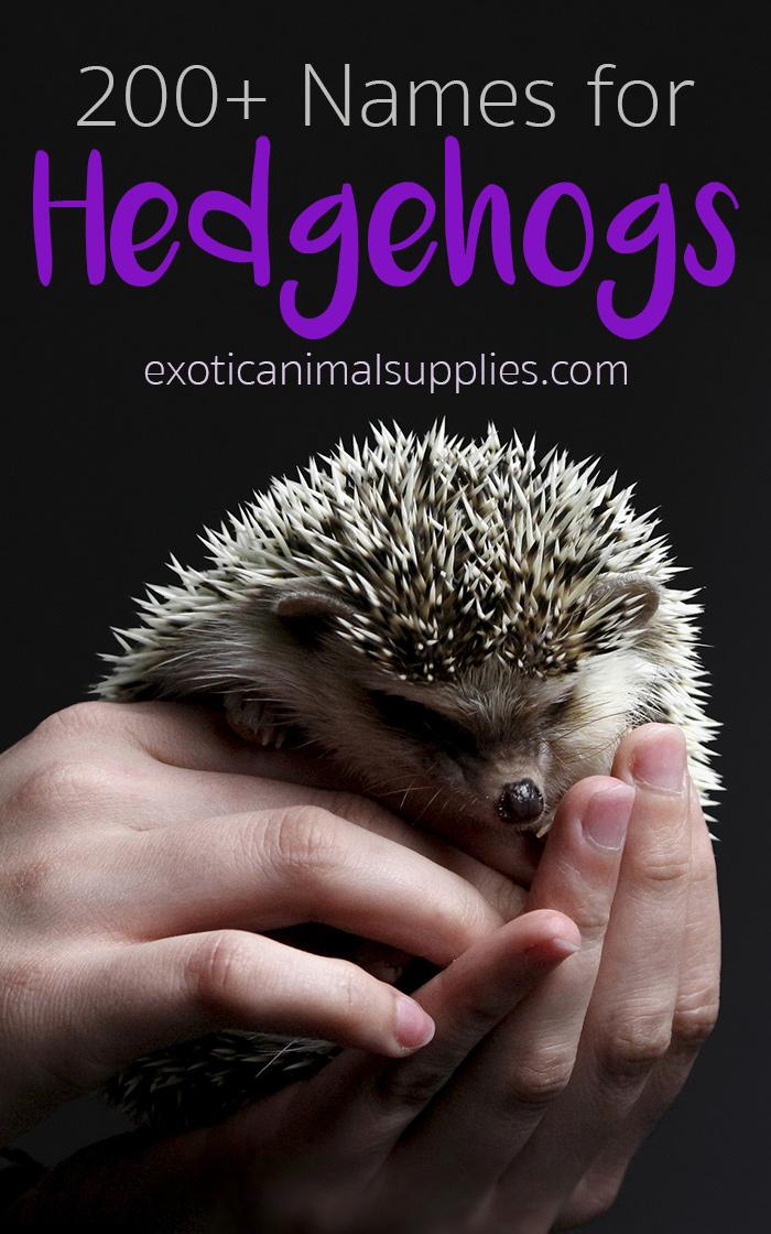 200+ Best Hedgehog Names for Girls & Boys