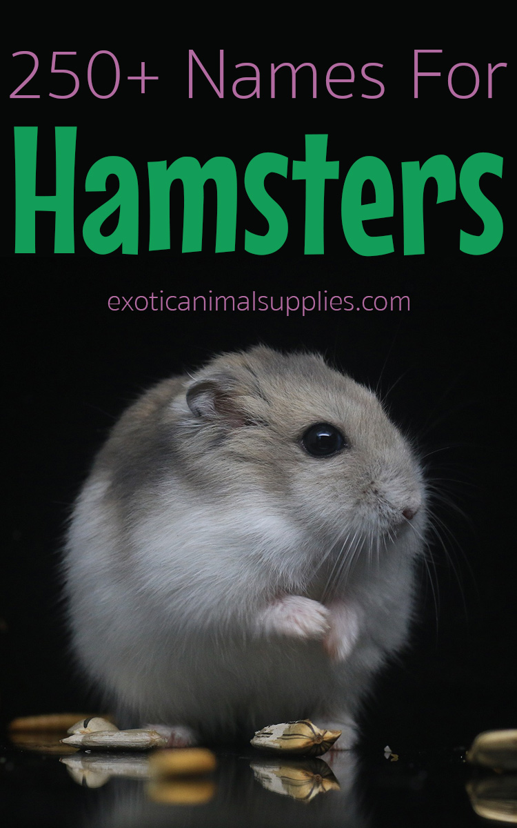 250+ Hamster Names for Male & Female Hamsters